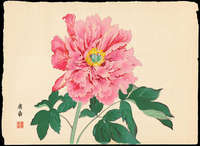 Tanigami Konan - Single Pink Peony in Full Bloom
